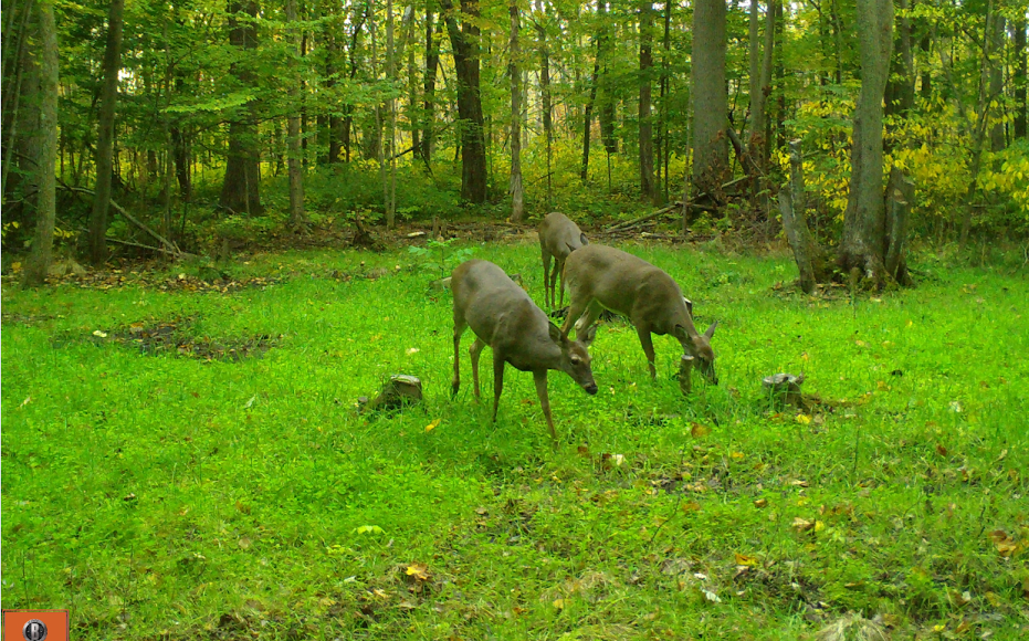 Backwoods Food Plot