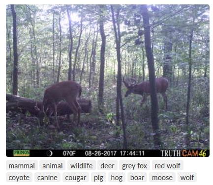 Deer Lab auto tags.