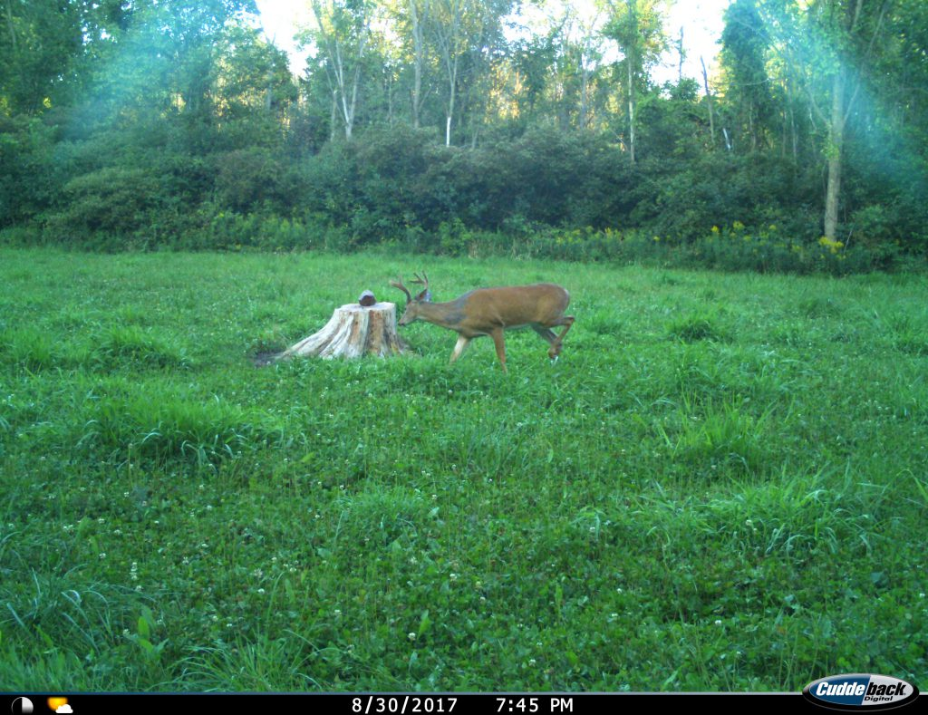 There is always early-season action in the food plots.