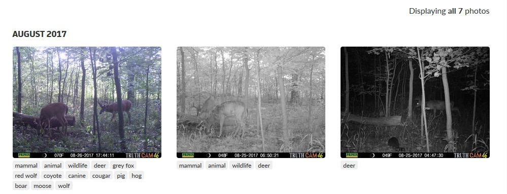 Tagged photos in Deer Lab.