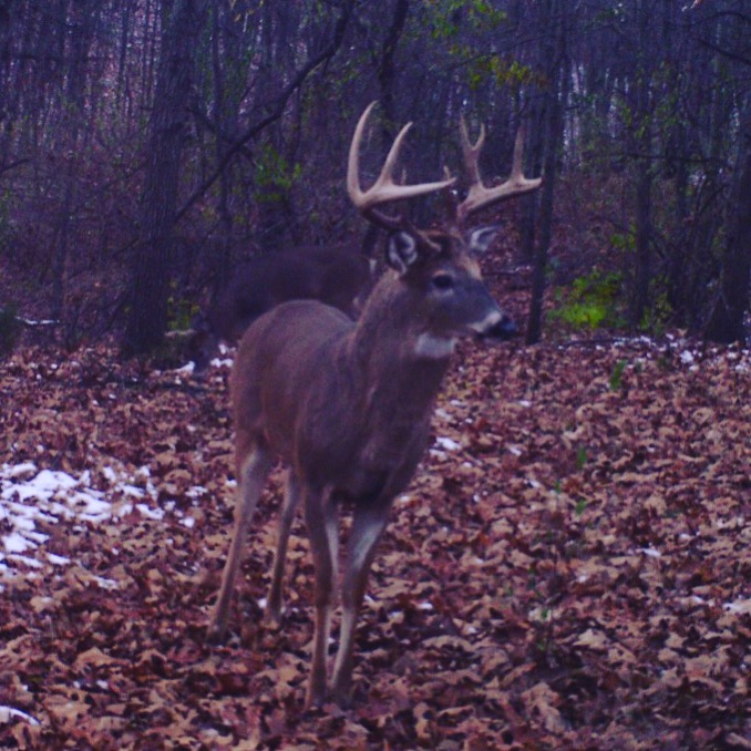 This SW Michigan giant showed his face for the first time Nov. 22nd, 2016.