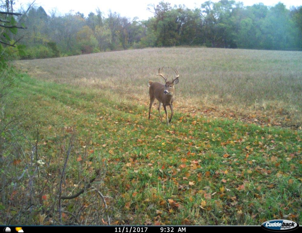 The large 8 point in our alfalfa food plot.