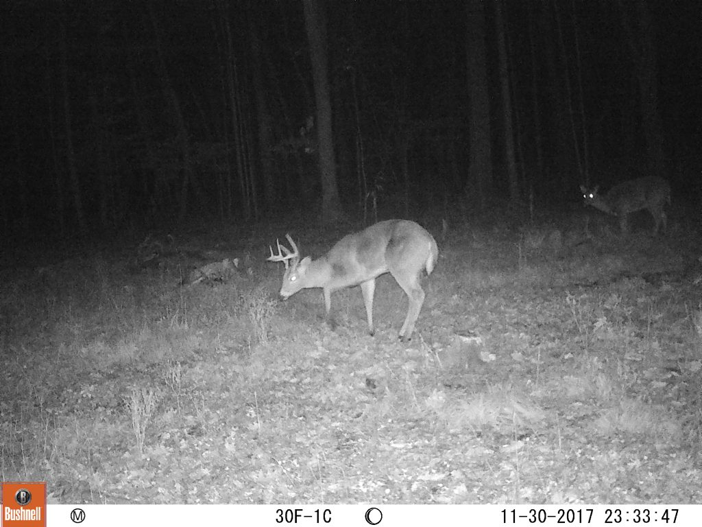 This buck returned to my food plot with the absence of surrounding agriculture.